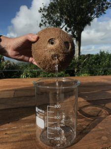 Fresh coconut water provides treatment for dry skin
